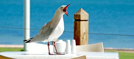 Havarie Gastronomie Marina Bortfeld Tischreservierung